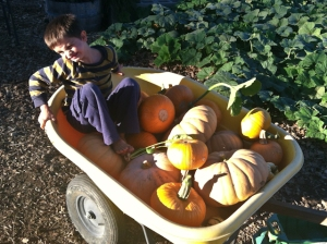 Sage rides with the pumpkins
